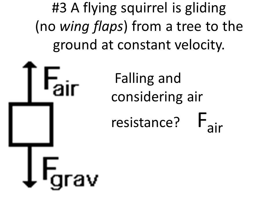 #3 A flying squirrel is gliding (no wing flaps) from a tree to the ground at constant velocity.