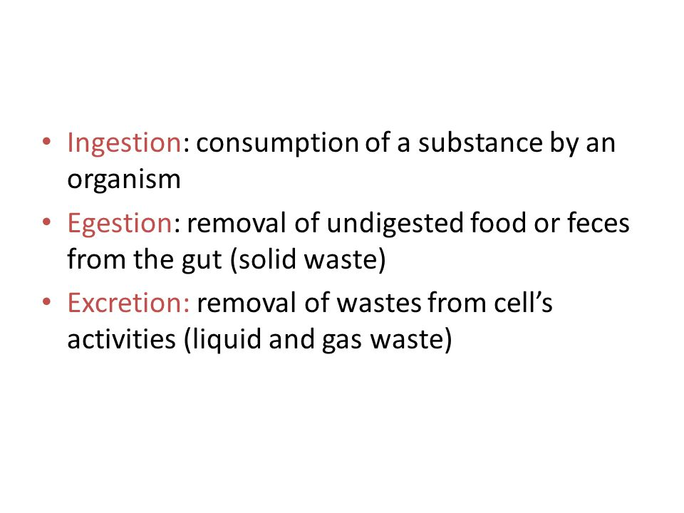 Ingestion: consumption of a substance by an organism