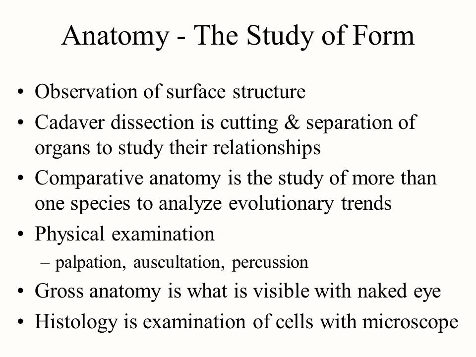 Chapter 1 Major Themes Of Anatomy Physiology Ppt Video Online