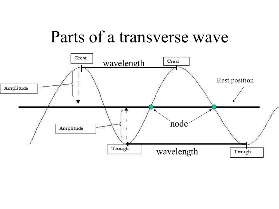 Parts of a transverse wave