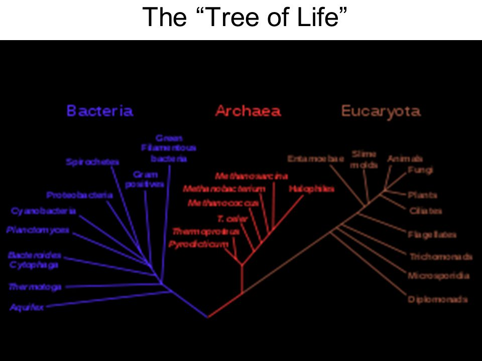 Evolution Unit Darwin S Theory Of Evolution Ppt Video