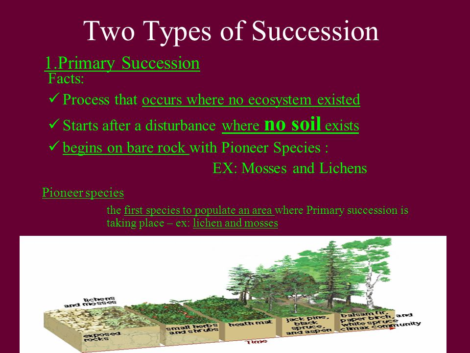 what are two types of ecological succession