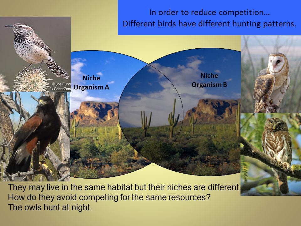 In order to reduce competition… Different birds have different hunting patterns.