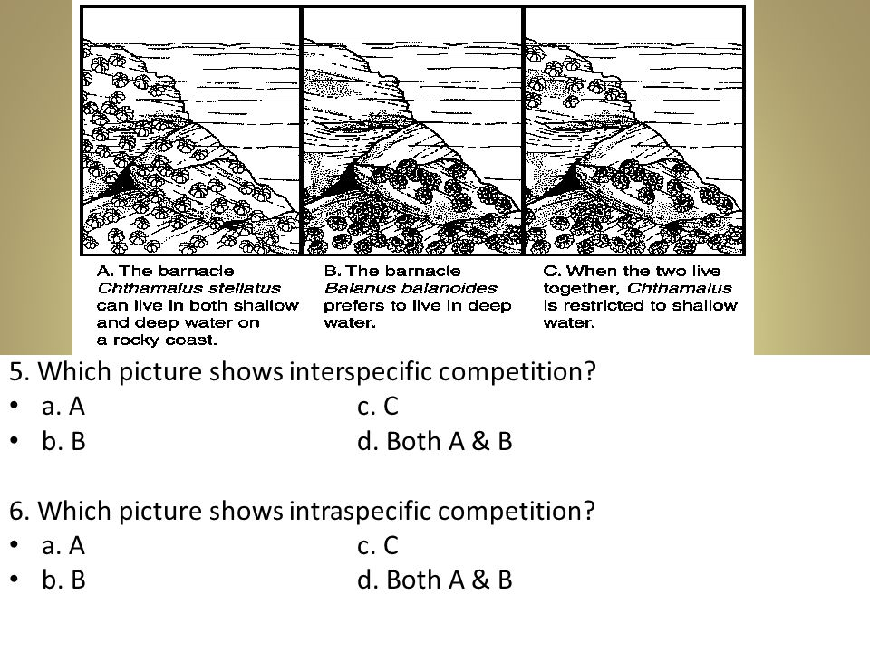 5. Which picture shows interspecific competition