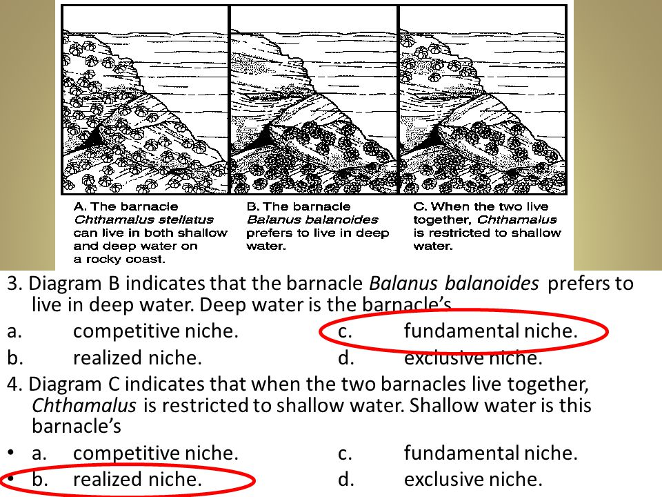 3. Diagram B indicates that the barnacle Balanus balanoides prefers to live in deep water. Deep water is the barnacle's