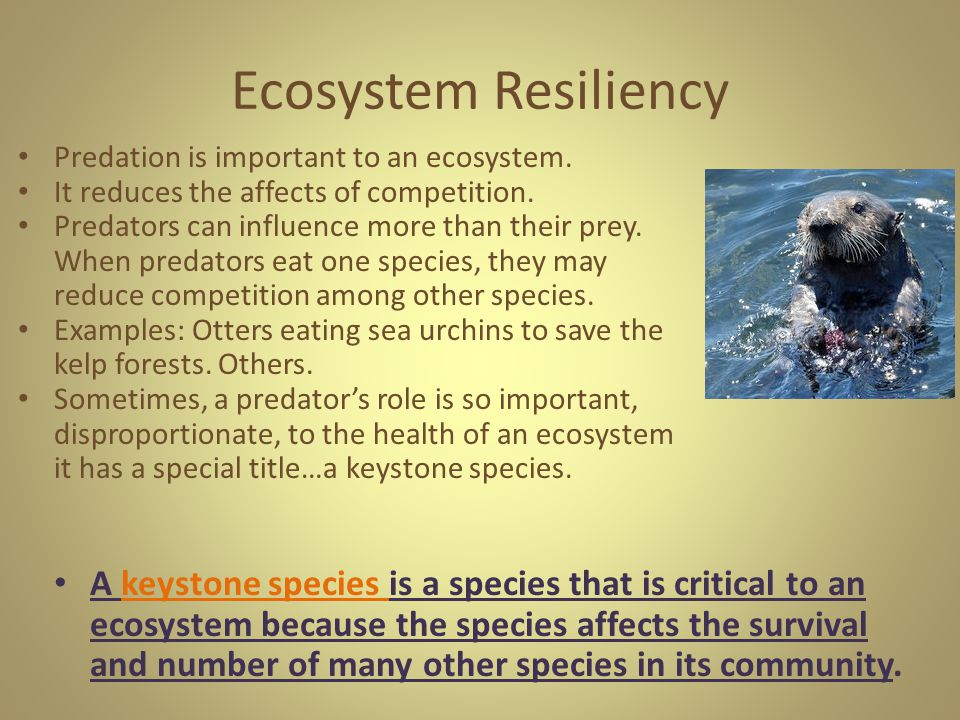 Ecosystem Resiliency Predation is important to an ecosystem. It reduces the affects of competition.