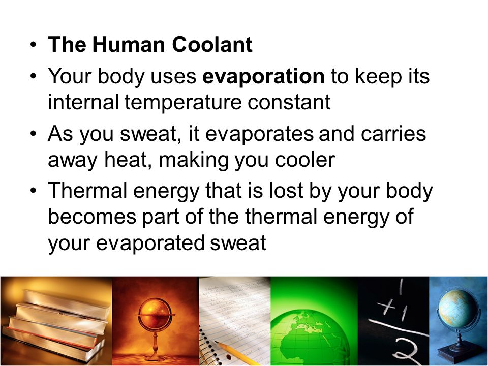 The Human Coolant Your body uses evaporation to keep its internal temperature constant.