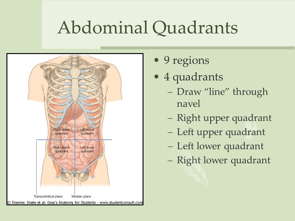 Surface Anatomy Vessels Muscles And Peritoneum Ppt Video Online