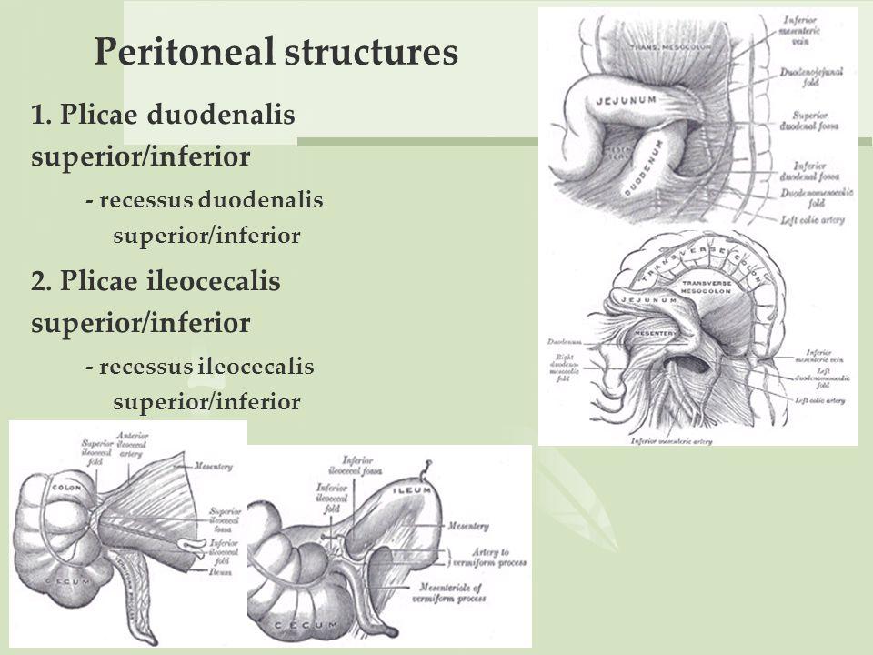 Plica duodenalis, A férgektől az emberek tablettáig