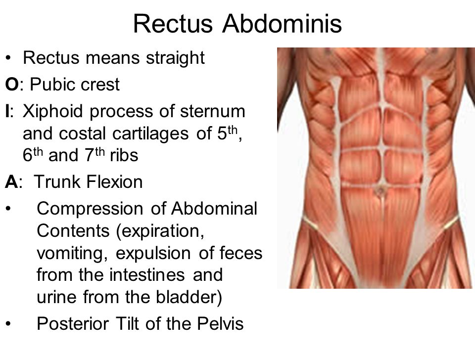 Muscles of the Core-Lumbo-Pelvic-Hip Complex - ppt video online download