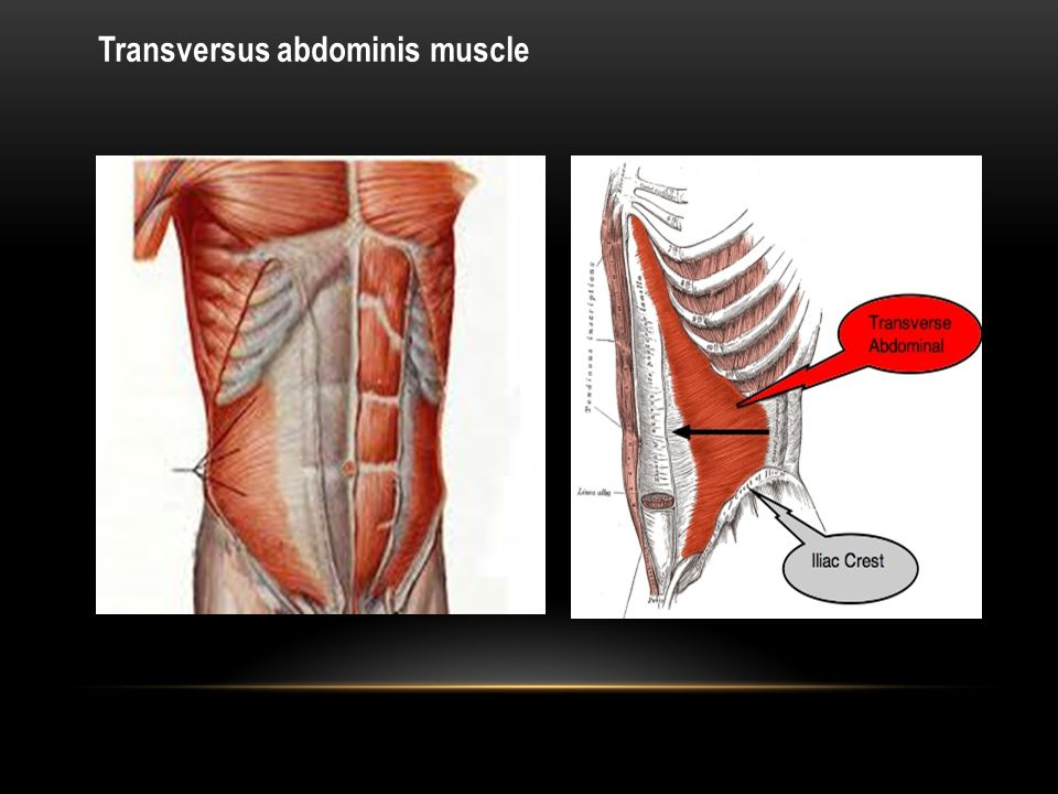 Anterior & posterior abdominal wall . - ppt download