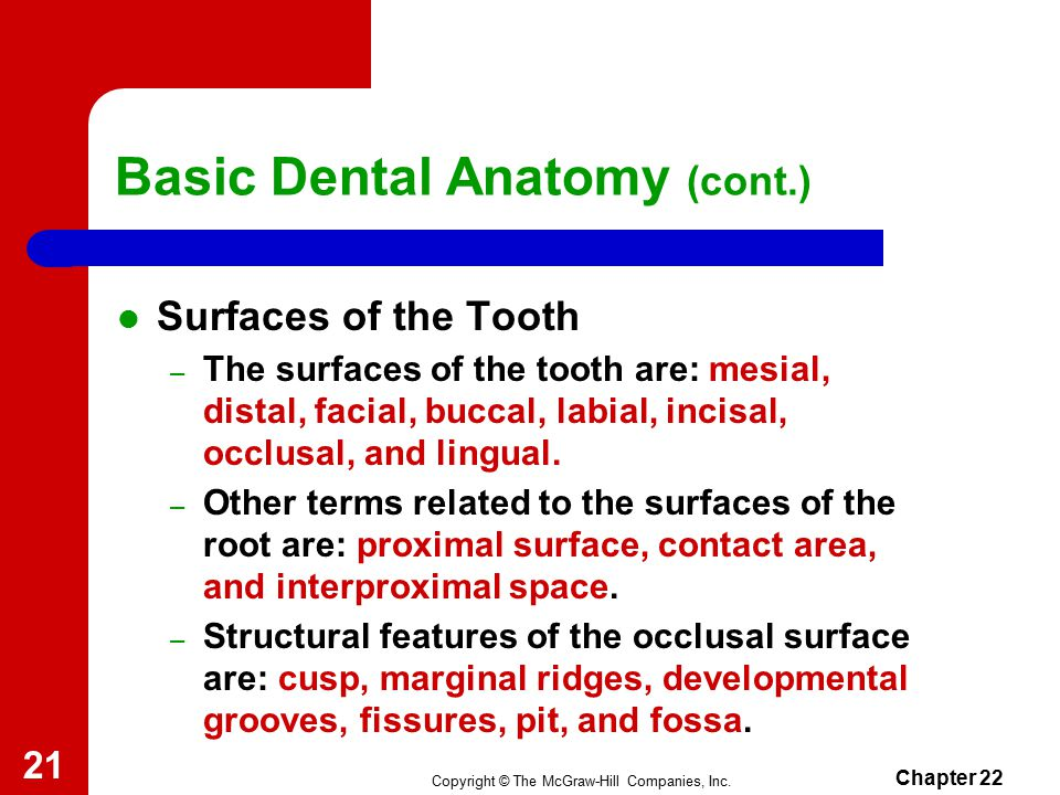 Old Fashioned Dental Anatomy Ppt Adornment Internal Organs Diagram