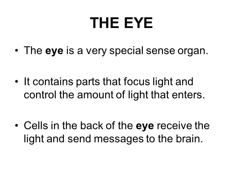 THE EYE The eye is a very special sense organ.