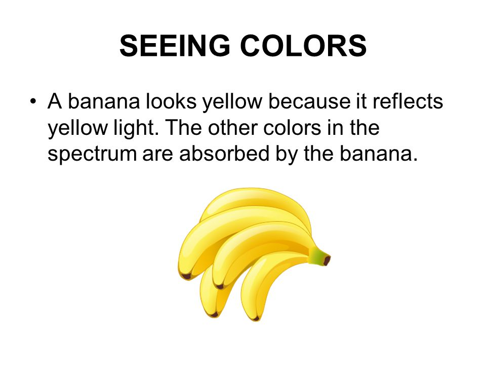 SEEING COLORS A banana looks yellow because it reflects yellow light.