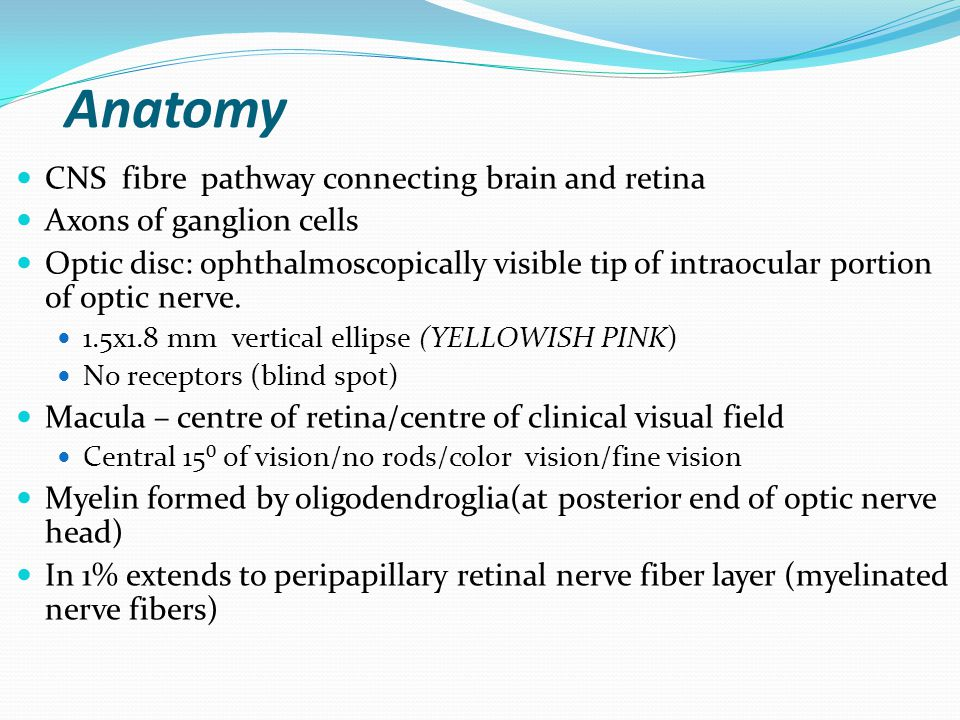Optic Nerve Applied Anatomy Clinical Evaluation And Approaches