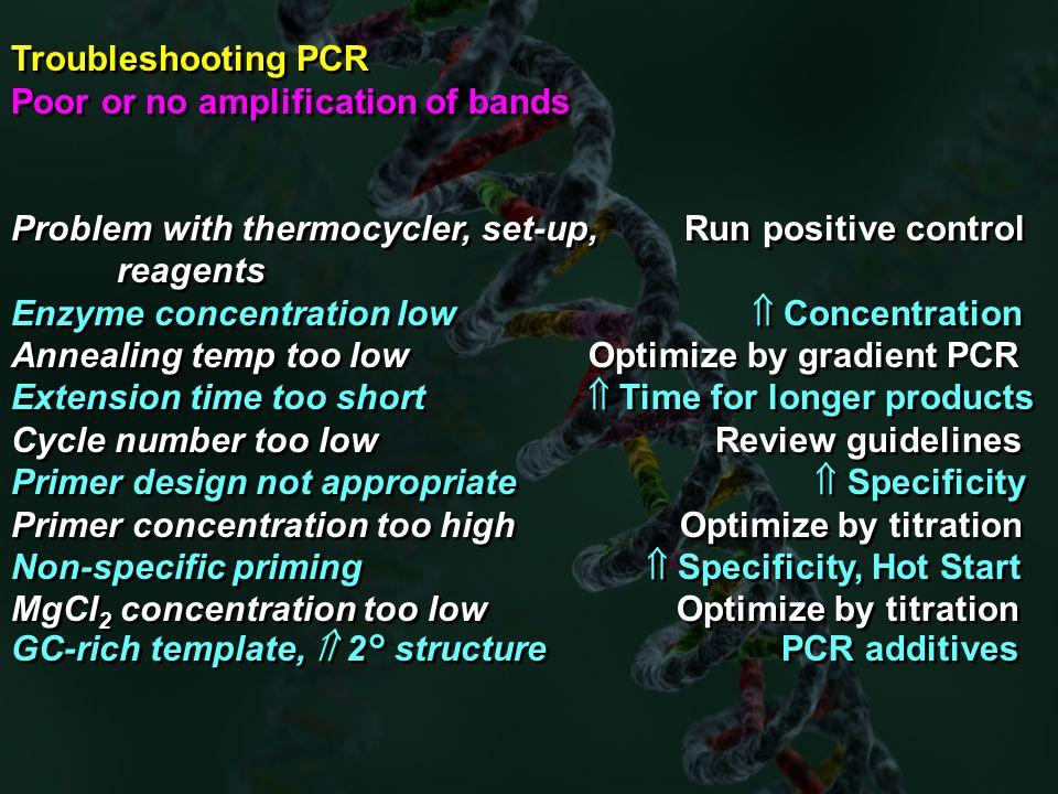 pcr primer design guidelines pdf