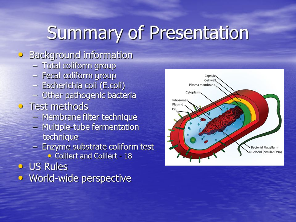 Testing for Fecal Coliforms and E coli - ppt video online