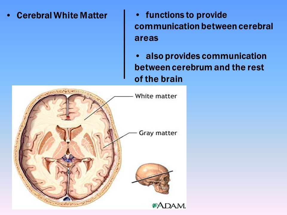 Cerebral White Matter functions to provide communication between cerebral areas.