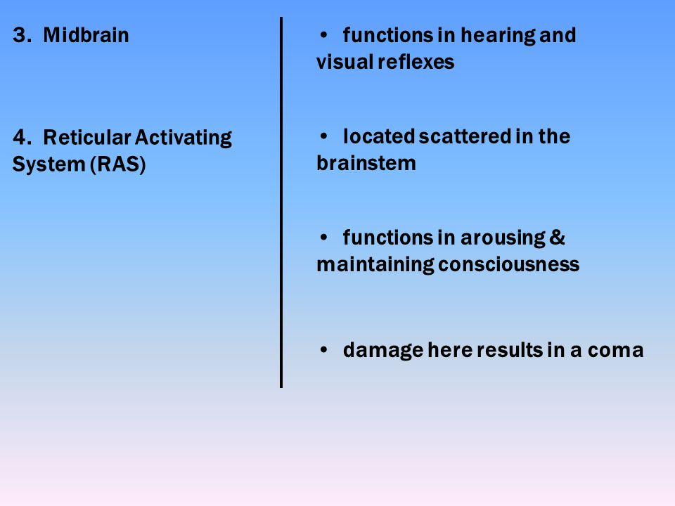 3. Midbrain functions in hearing and visual reflexes. 4. Reticular Activating System (RAS) located scattered in the brainstem.