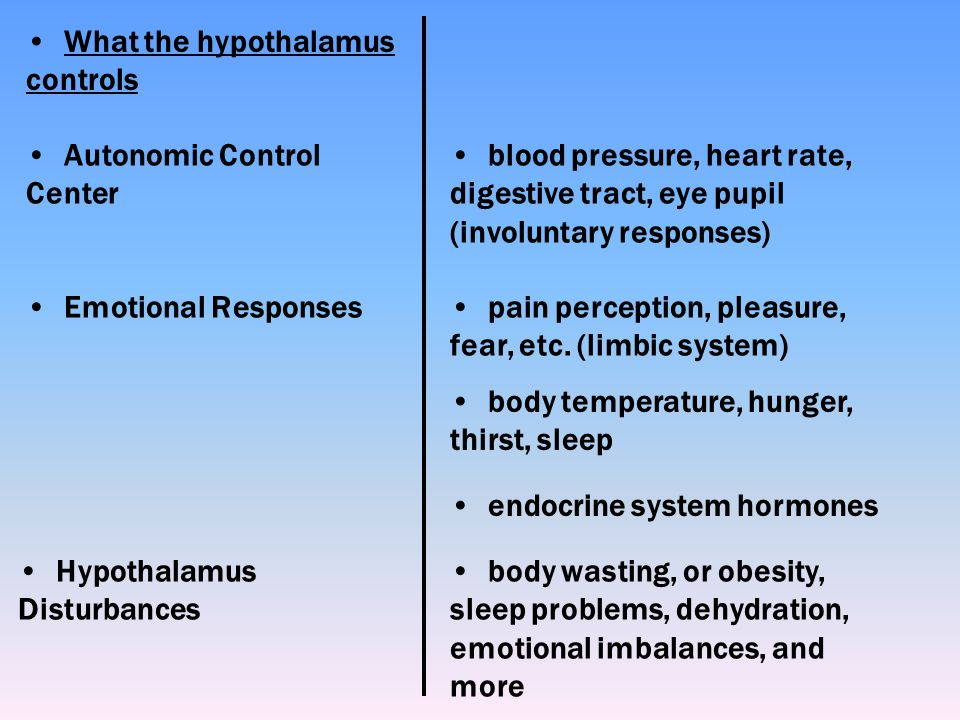 What the hypothalamus controls