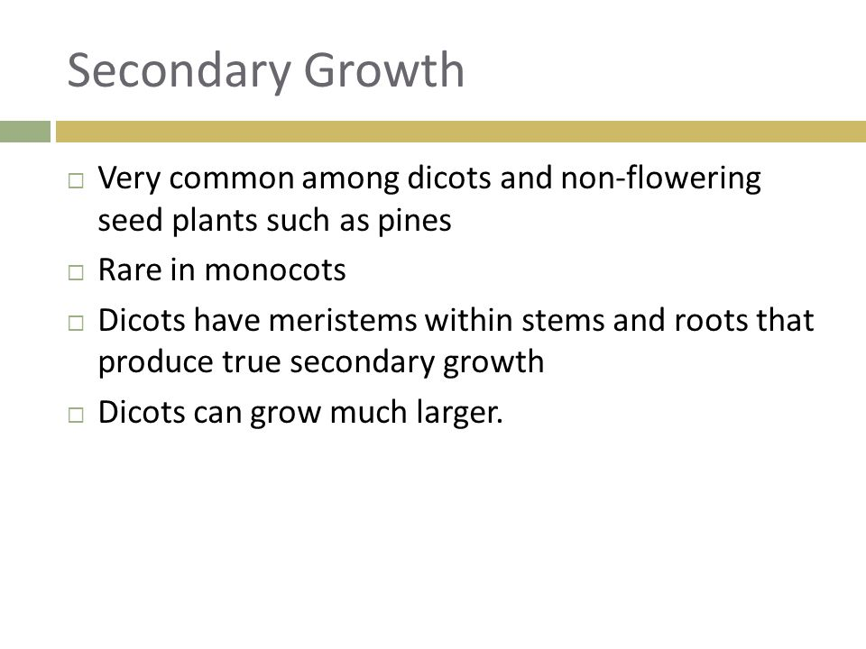 Secondary Growth Very common among dicots and non-flowering seed plants such as pines. Rare in monocots.