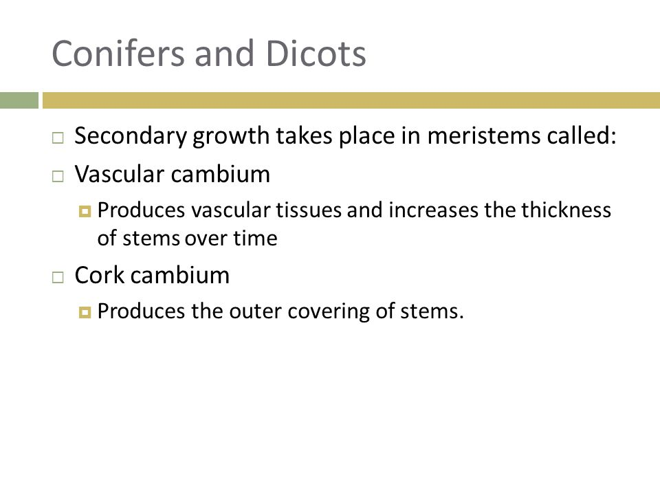 Conifers and Dicots Secondary growth takes place in meristems called: