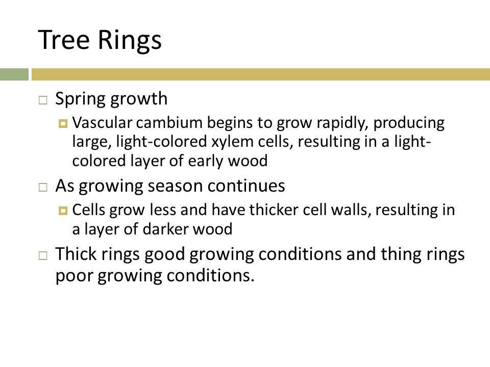 Tree Rings Spring growth As growing season continues