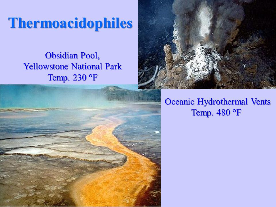 what are thermoacidophiles