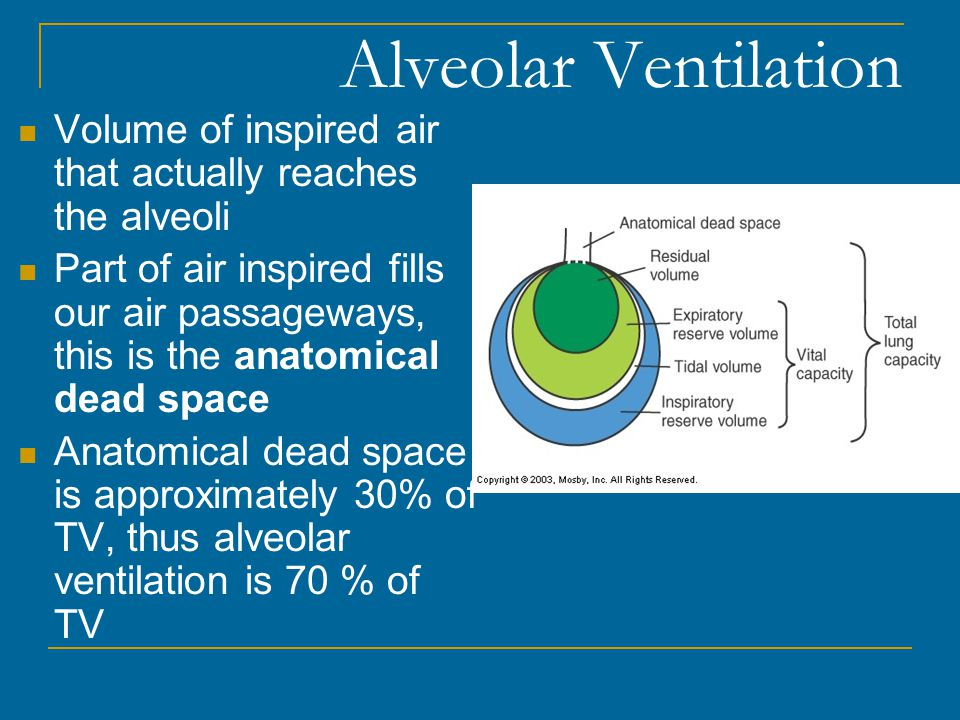 Alveolar Ventilation Volume of inspired air that actually reaches the alveoli.