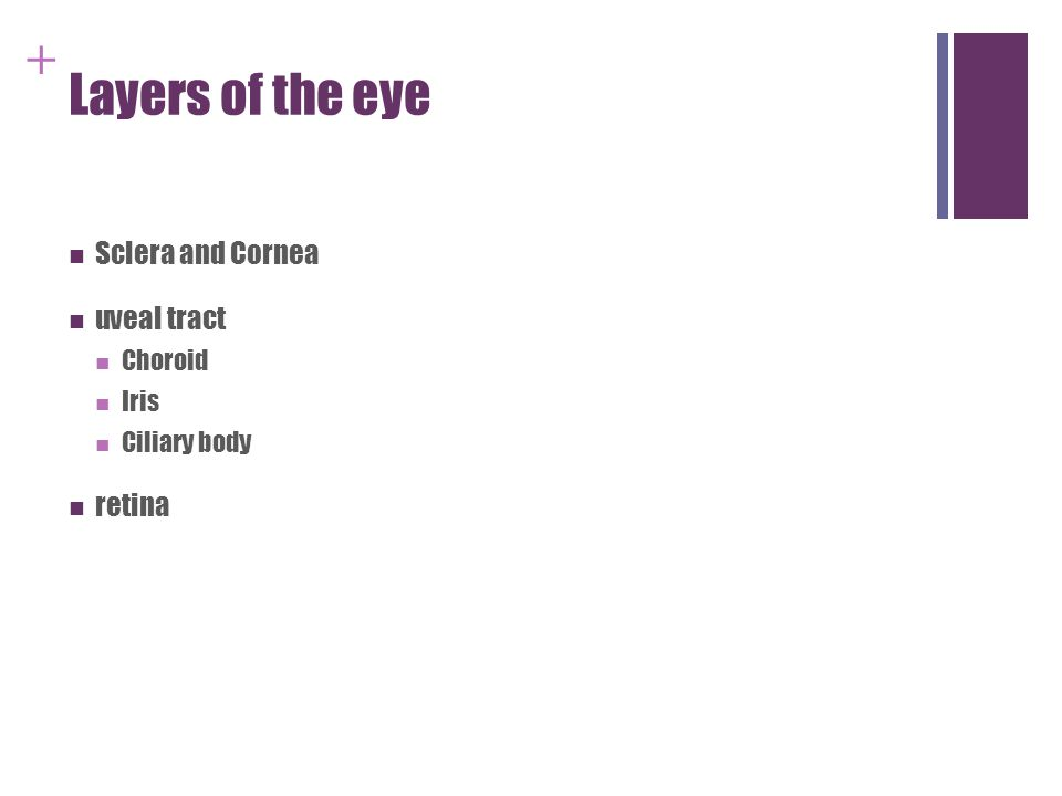Structure and Function of the Eye - ppt video online download