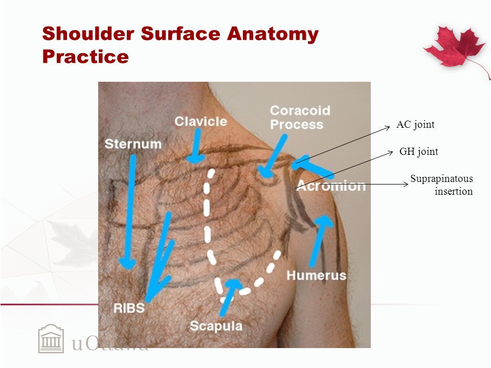 The Shoulder: Complex Joint Simplified - ppt download