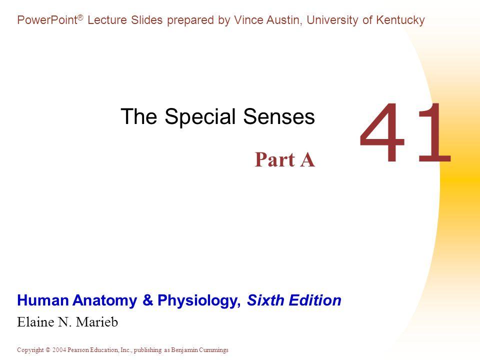 The Special Senses Part A - ppt download