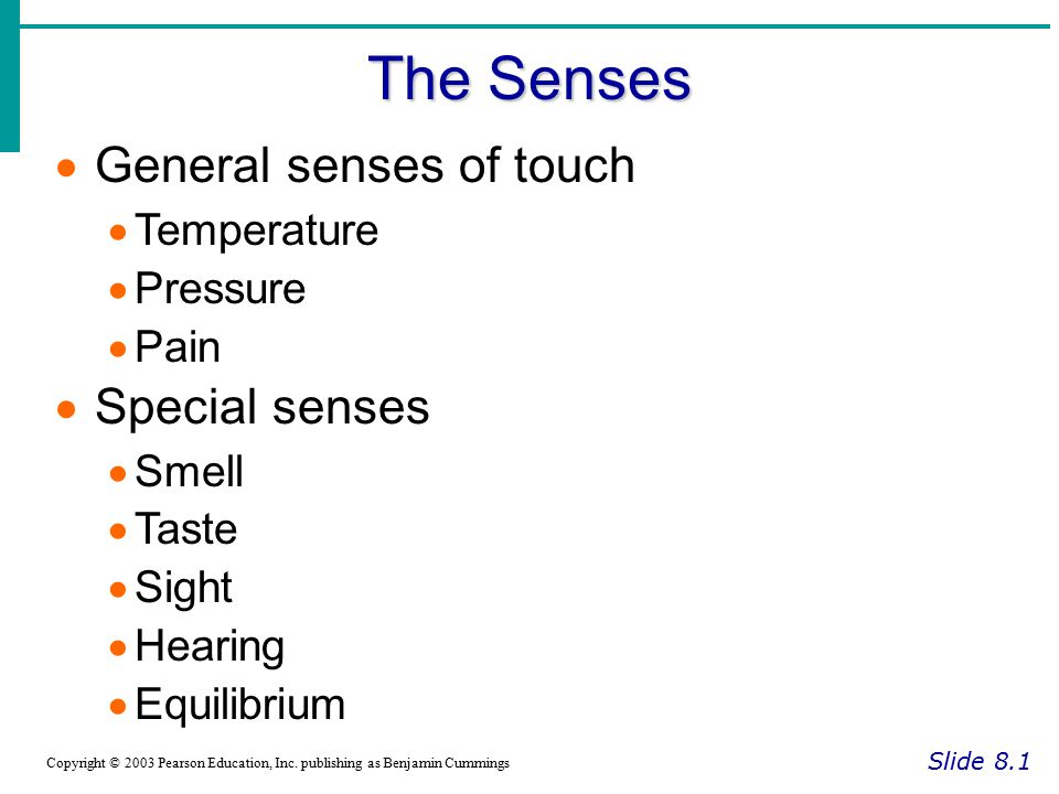 Chapter 8 Special Senses - ppt download