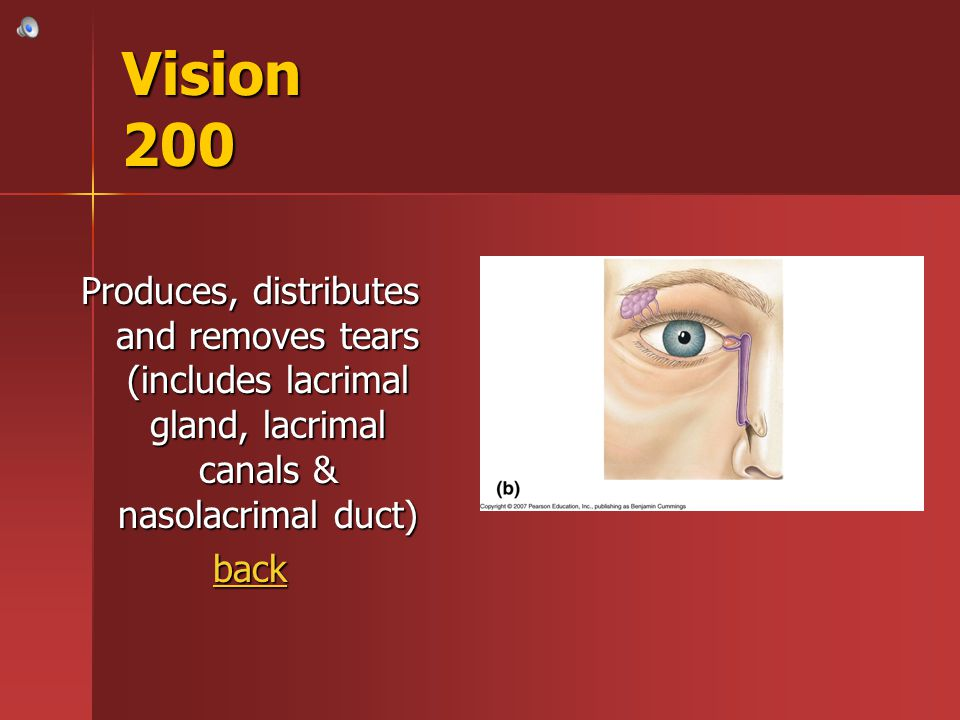 Vision 200 Produces, distributes and removes tears (includes lacrimal gland, lacrimal canals & nasolacrimal duct)