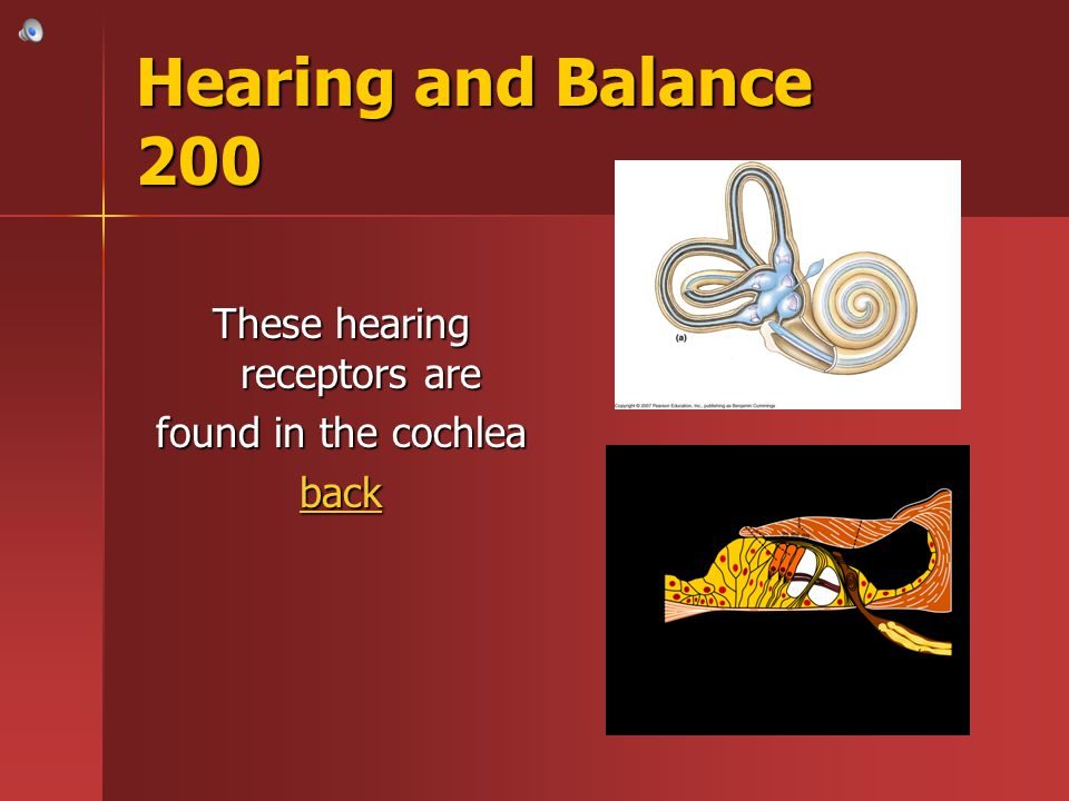 These hearing receptors are