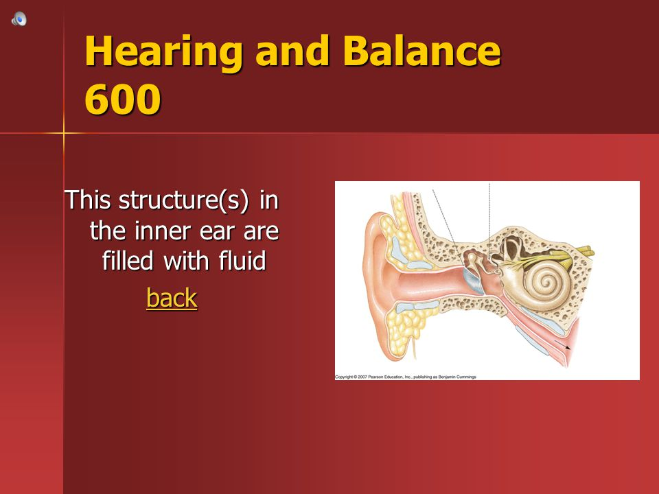 This structure(s) in the inner ear are filled with fluid