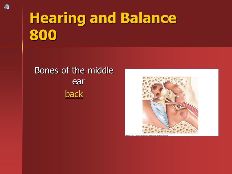 Hearing and Balance 800 Bones of the middle ear back