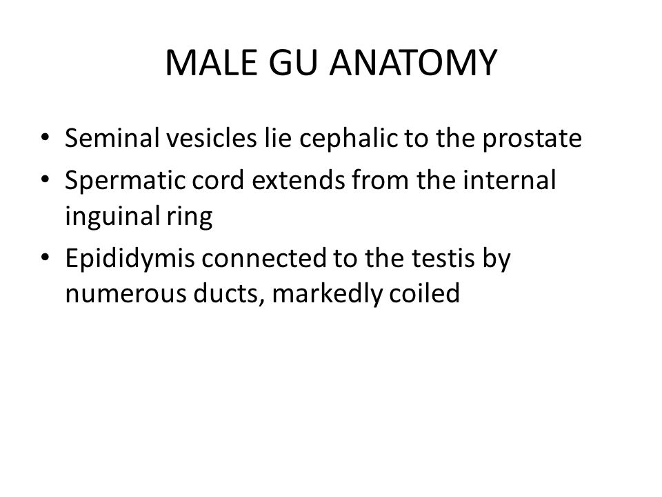 GU ANATOMY AND PHYSIOLOGY - ppt download