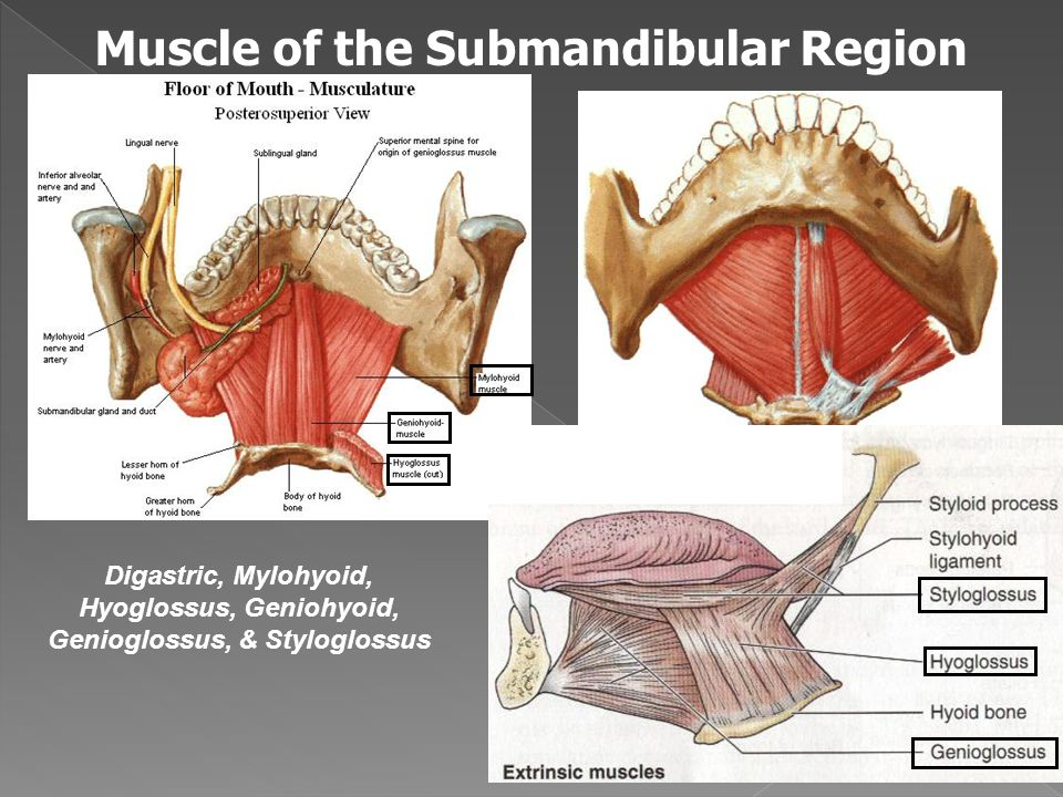 The Submandibular Region Ppt Video Online Download