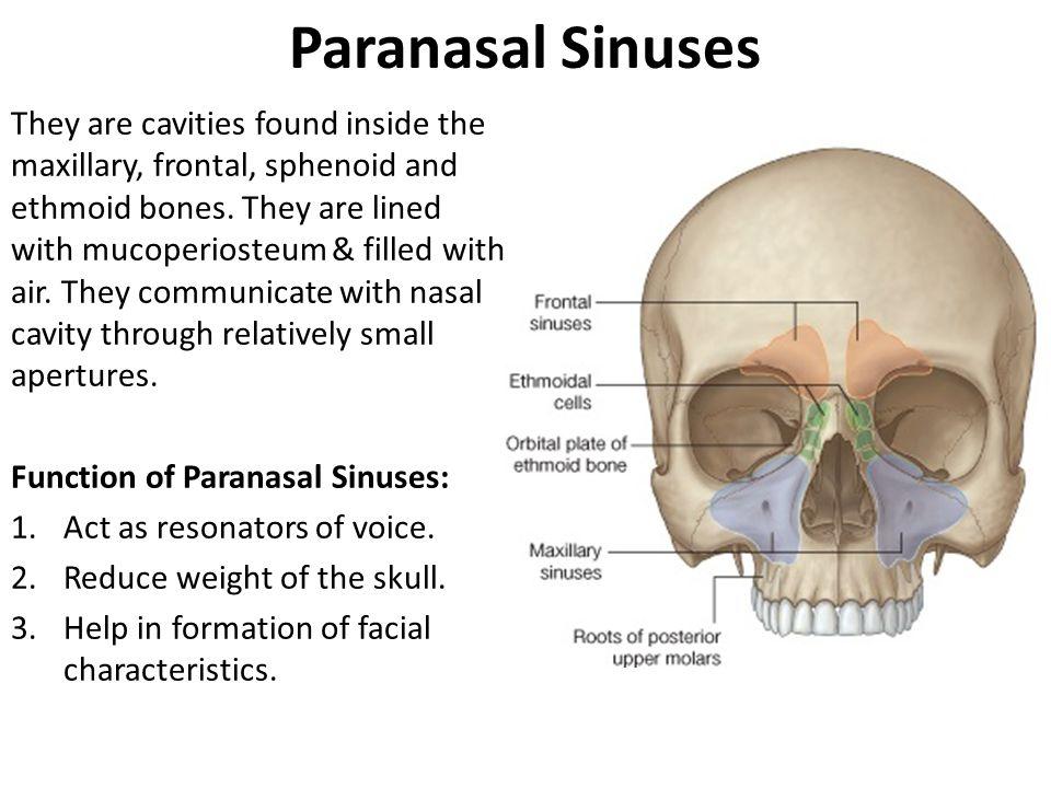 Nasal Cavity & Paranasal sinuses - ppt video online download