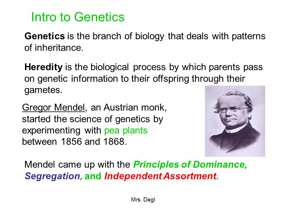genetics the biology of violence The genetics of violence introduction we, in the 1990's, are slowly and inevitably being faced with the sociological and biological implications of whether the desire to kill non-biological offspring is based on biology, sociology, or simple emotion, this example displays the difficulty of pinning any sort.