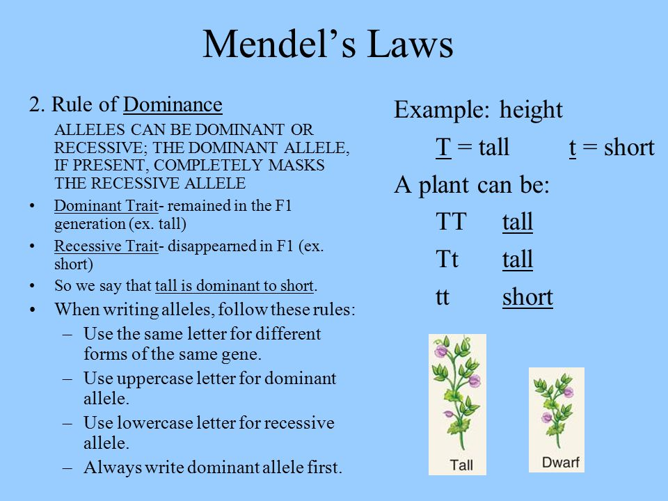Mendel's Laws Example: height T = tall t = short A plant can be: