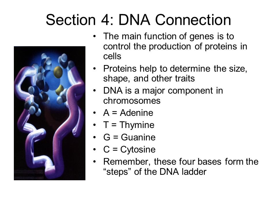 Section 4: DNA Connection