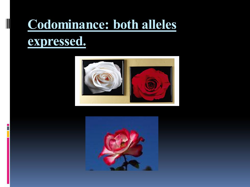 Codominance: both alleles expressed.