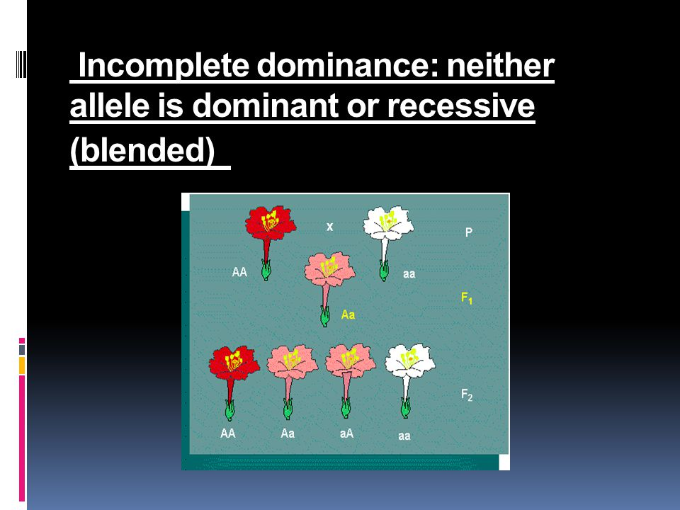 Incomplete dominance: neither allele is dominant or recessive (blended) neither allele is dominant or recessive (blended)