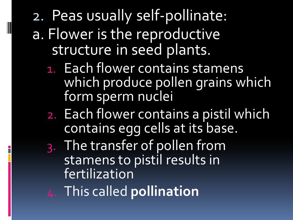 Peas usually self-pollinate: