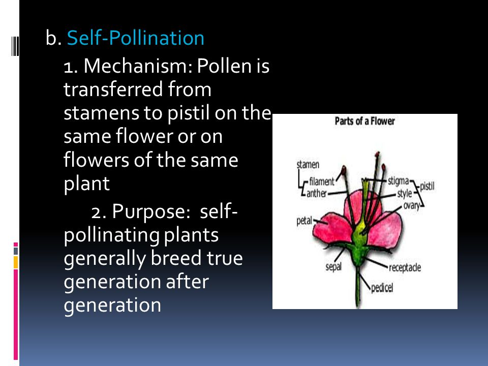 b. Self-Pollination 1. Mechanism: Pollen is transferred from stamens to pistil on the same flower or on flowers of the same plant.