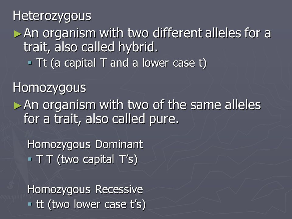 Heterozygous An organism with two different alleles for a trait, also called hybrid. Tt (a capital T and a lower case t)