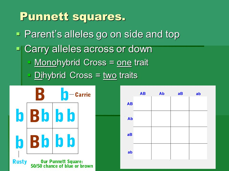 Punnett squares. Parent's alleles go on side and top
