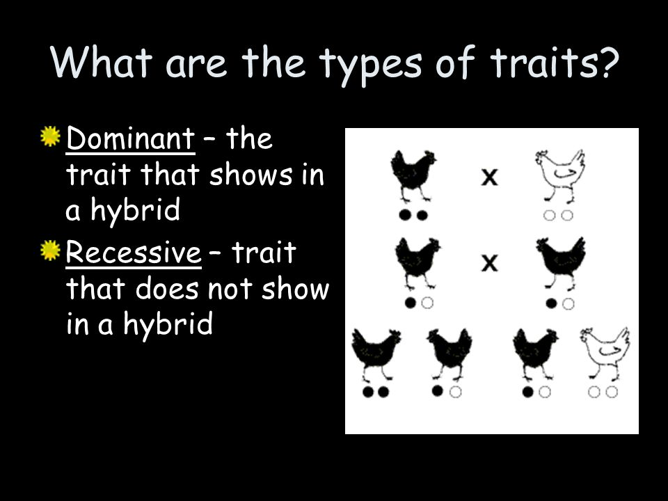 What are the types of traits